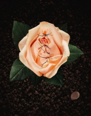 mutilated rose metaphorical image for FGM